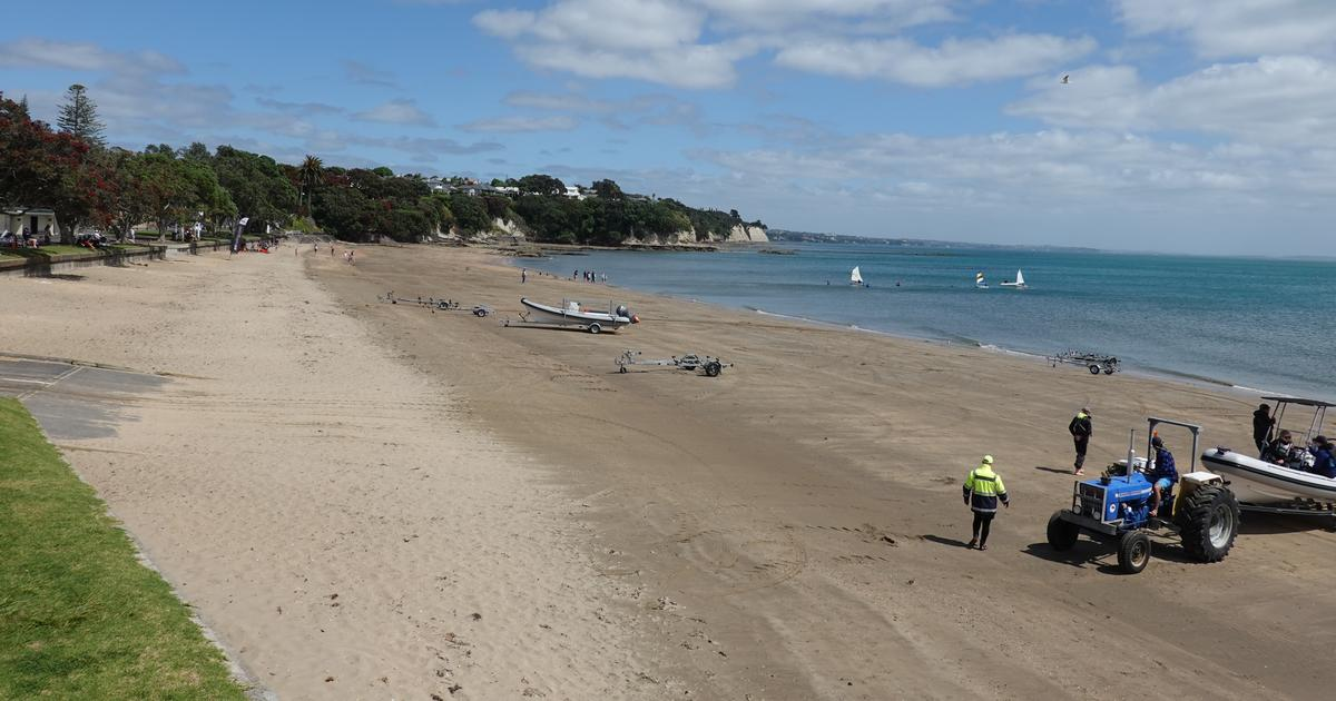 Narrow Neck beach where small sailing boats compete inshore and a tractor prepares to tow a boat up the beach to the boat ramp